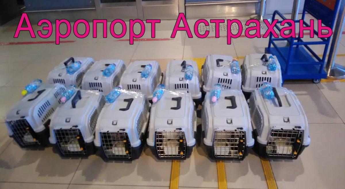 О нас пишут: Астраханка отправила на одном авиарейсе 12 кошек. Что?Да!